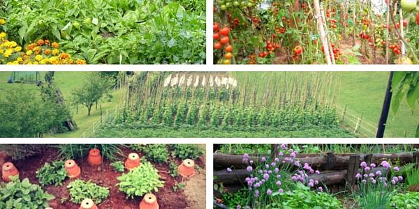 slovenski vrtovi