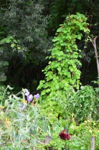 ekološki vrt poleti
