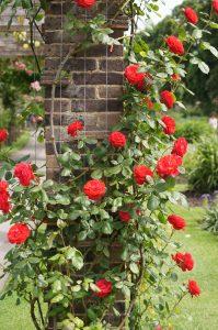Načrtovanje vrta - kamnita pergola in rdeče vrtnice