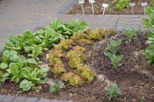Načrtovanje vrta - malo drugačne gredice