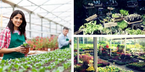 Z aplikacijo Posadi.si do vrtnarij in vrtnih centrov v Sloveniji