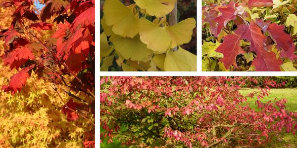 Javor in ostalo okrasno drevje, ki je jeseni najlepše