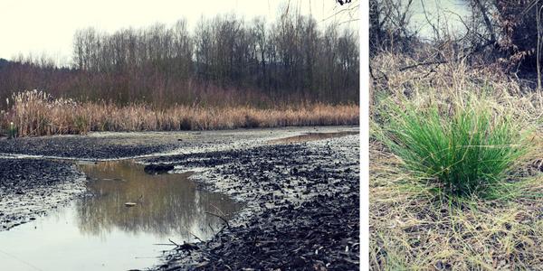 ločje, onesnaženi vodni viri, pomen mokrišč, ČIŠČENJE ONESNAŽENIH VODNIH VIROV