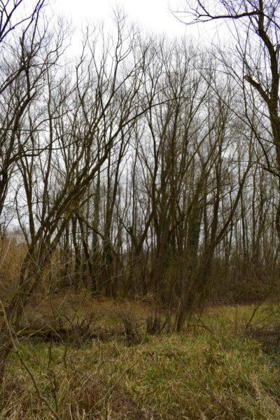 Ekosistem vrbina, mokri travnik, čiščenje vode, ČIŠČENJE ONESNAŽENIH VODNIH VIROV IN POMEN MOKRIŠČ