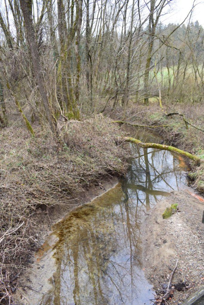 Meandri, obrečno rasjte, čiščenje vode, vodni viri, ČIŠČENJE ONESNAŽENIH VODNIH VIROV IN POMEN MOKRIŠČ