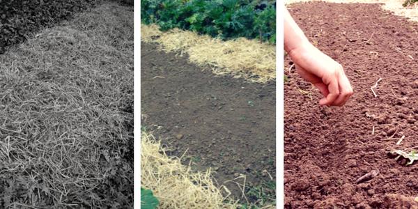 zimska zastirka, vrt brez prekopavanja, spomladanska priprava vrta, nihajna motika, spomladanska priprava gredic