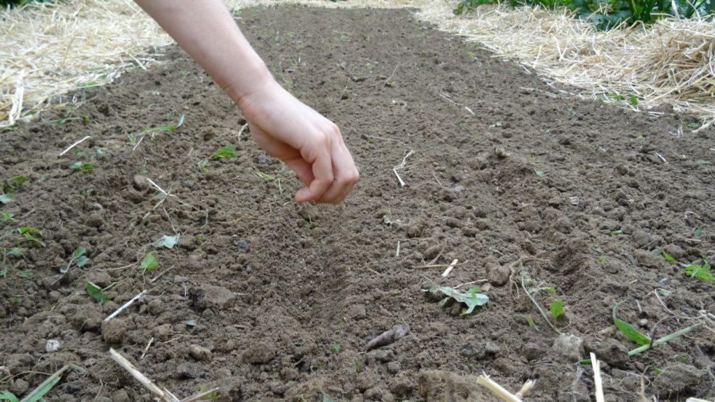 setev, trajnostno vrtnarjenje, vrt brez prekopavanja, vrt brez štihanja, nihajna motika, spomladanska priprava vrta brez prekopavanja