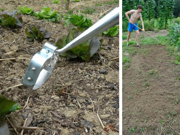 nihajna motika, vrt brez prekopavanja, vrt brez štihanja, spomladanska priprava vrta