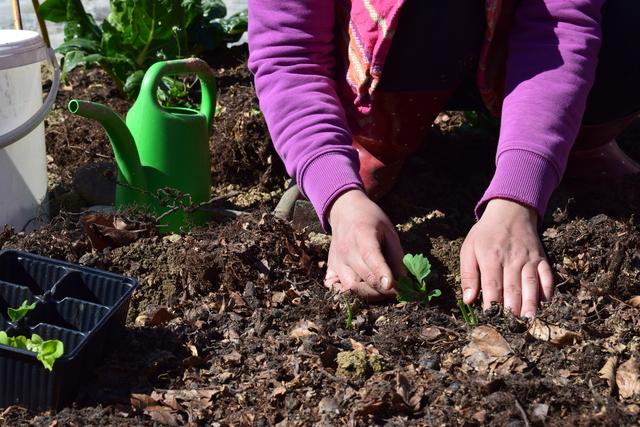 Brigitni vrtičkarski nasveti, posadi.si blog,vrtnarski nasveti, abc vrtičkanja, načrtovanje vrta, setvei načrt, nega rastlin, zalivanje, aplikacija posadi.si, koristni nasveti, vrtnarski nasveti iz Brigitinega vrta