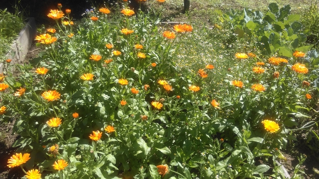 Brigitni vrtičkarski nasveti, vrtnarski nasveti, posadi.si blog,vrtnarski nasveti, abc vrtičkanja, načrtovanje vrta, setvei načrt, nega rastlin, zalivanje, dobri in slabi sosedi, aplikacija za dobre in slabe sosede, Posadi.si