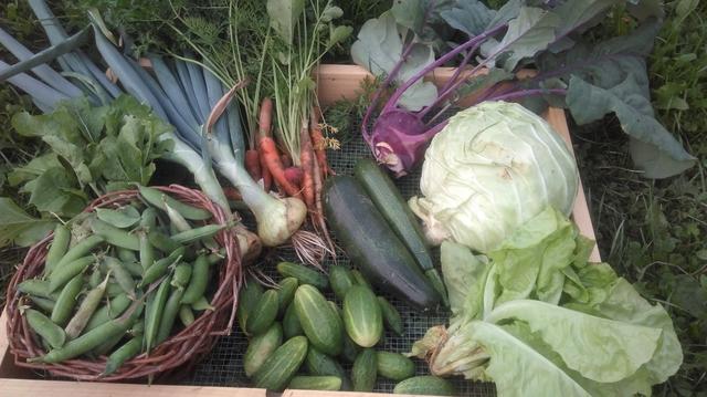 Brigitni vrtičkarski nasveti, posadi.si blog,vrtnarski nasveti, abc vrtičkanja, načrtovanje vrta, setvei načrt, nega rastlin, zalivanje, vrtnarski nasveti iz Brigitinega vrta