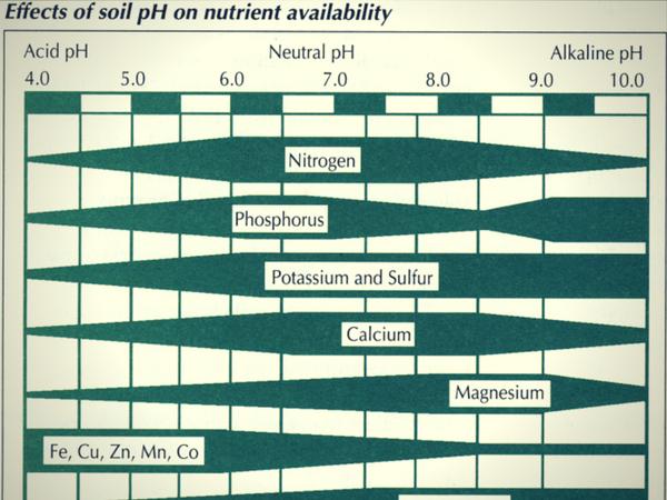 hranilni elementi v zemlji, analiza zemlje, analiza tal, rodovitnost zemlje, poceni analiza zemlje, merjenje kislosti tal, zakisanost tal