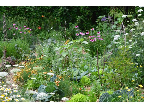 orto in luglio, calendario lunare luglio, cosa piantare in luglio