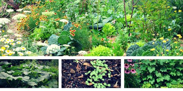 vrt julija, setveni koledar julij, setveni koledar marije thun za julij, opravila na vrtu v juliju, sajenje in presajanje v juliju, naravni pripravki za krepitev rastlin, pripravek iz njivske preslice in kopriv, nega vrta poleti