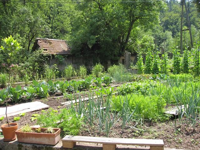 permakultura za začetnike, kako začeti s permakulturnim vrtom