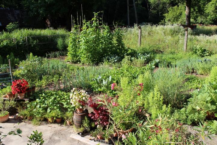 permakultura in mešani posevki, biodinamični vrt, biodinamično vrtnarjenje,ako začeti s permakulturnim vrtom