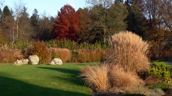 okrasne trave, trajnice, prezimne okrasne travem , nega okrasnih trav pozimi