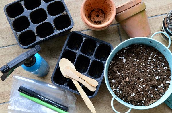 kako sadimo brokoli in cvetačo, setev brokolija, setev cvetače