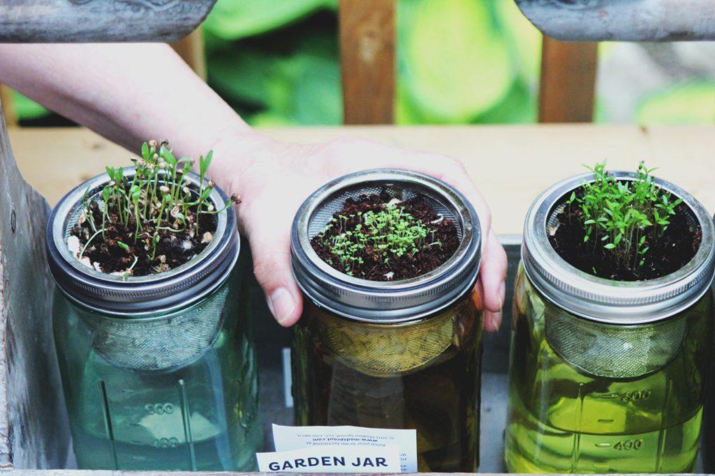 kaljenje semen, kalitev, zelenjavni vrt
