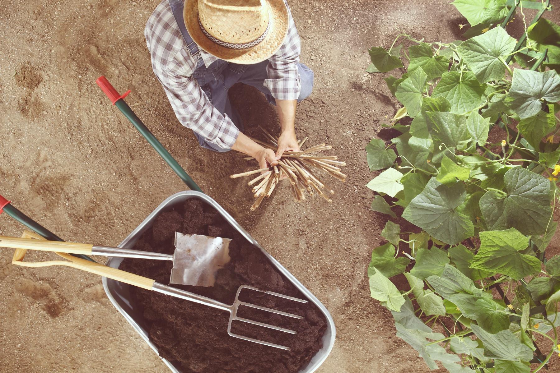Preprost načrt vrta s kolobarjenje, dobri in slabi sosedi, grede, zasaditev, zelenjadnice