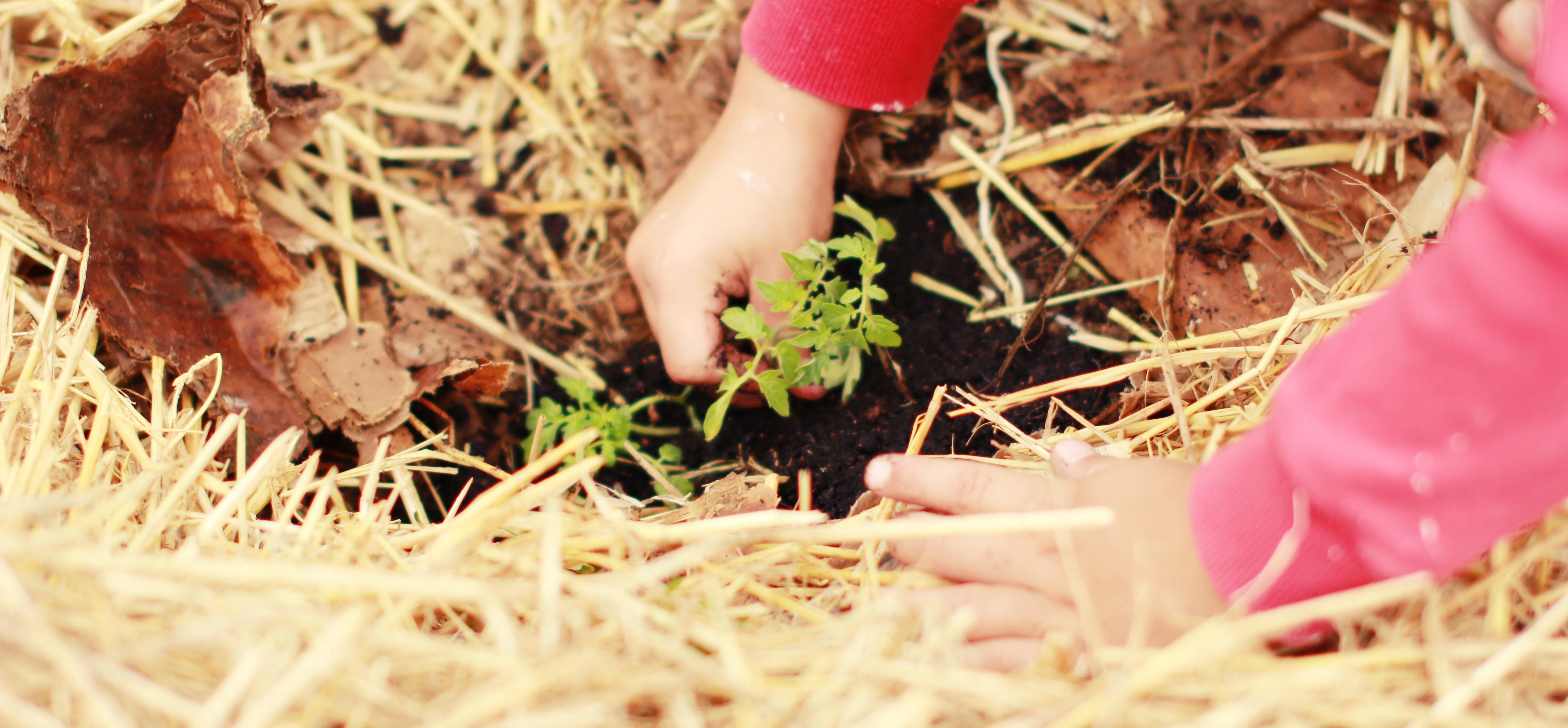 Nasveti za ureditev vrta, ki je namenjen otrokom. Vrt za otroke oblikujemo tako, da se otroci v njem dobro in varno počutijo.