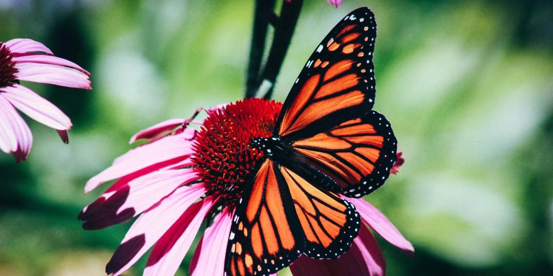opraševalci, medonosne rastline, čebele, na vrtu, koristne živali