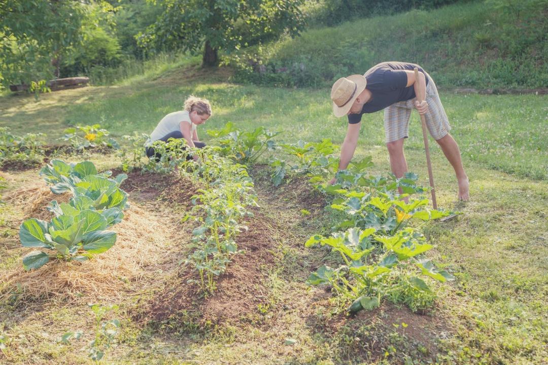 permakultura, permakulturni vrt, zastirka, visoke grede, spiralna greda