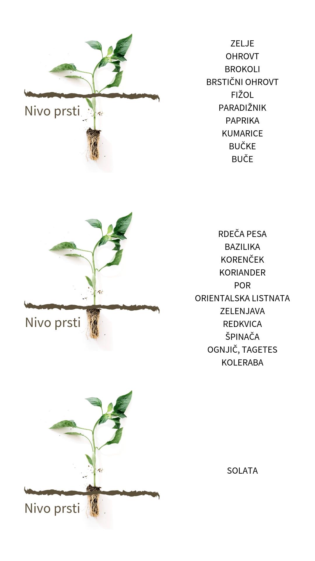 na kakšen način sadimo sadike, kako presajamo, kam posadimo na vrtu