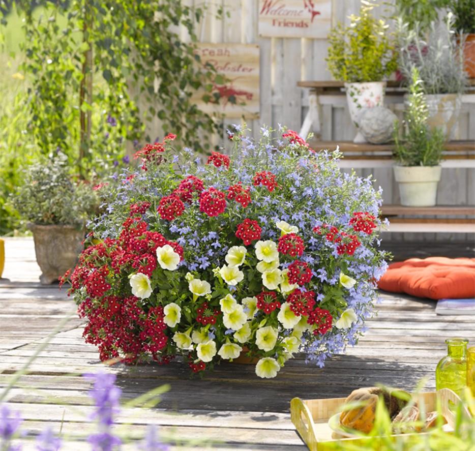 verbena roža, verbena trajnica, sajenje verbene, cvetlične kombinacije z verbeno, lobeilja trajnica, lobelija vzdrževanje, potonika trajnica, lobelija rumena, potonika bela, kaj saditi skupaj z potoniko, kaj saditi skupaj z lobelijo,balkonske rože trajnice, rastline za balkon, cvetje poletje 2019