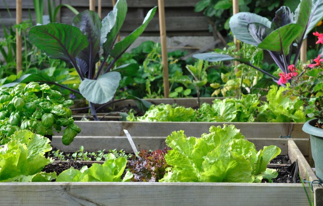 načrtovanje vrta, načrt vrta, zasaditev na vrtu