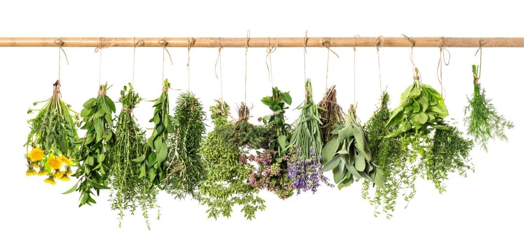 sušenje zelišč aromatičnih rastlin doma v šopkih