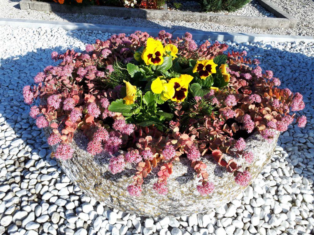 primerne rože za pokopališče, kako ohranimo rože na pokopališču, cvetje za sušo, rože za grob 2019, jesenske zasaditve za pokopališče 2019, idejne zasaditve za grob,nagrobne rastline