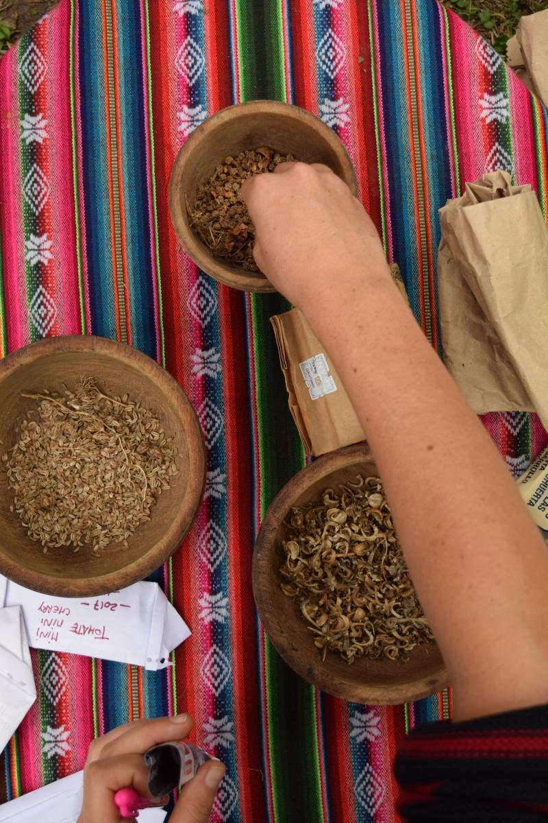 izmenjava semen avtohtono seme domača sorta