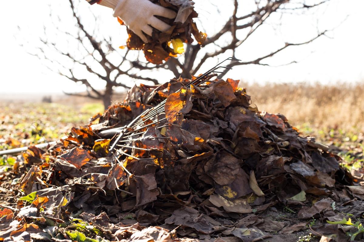 kam z listjem odpadlo listje na kupu grablje