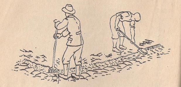 Prekopavanje, delo na vrtu v decembru