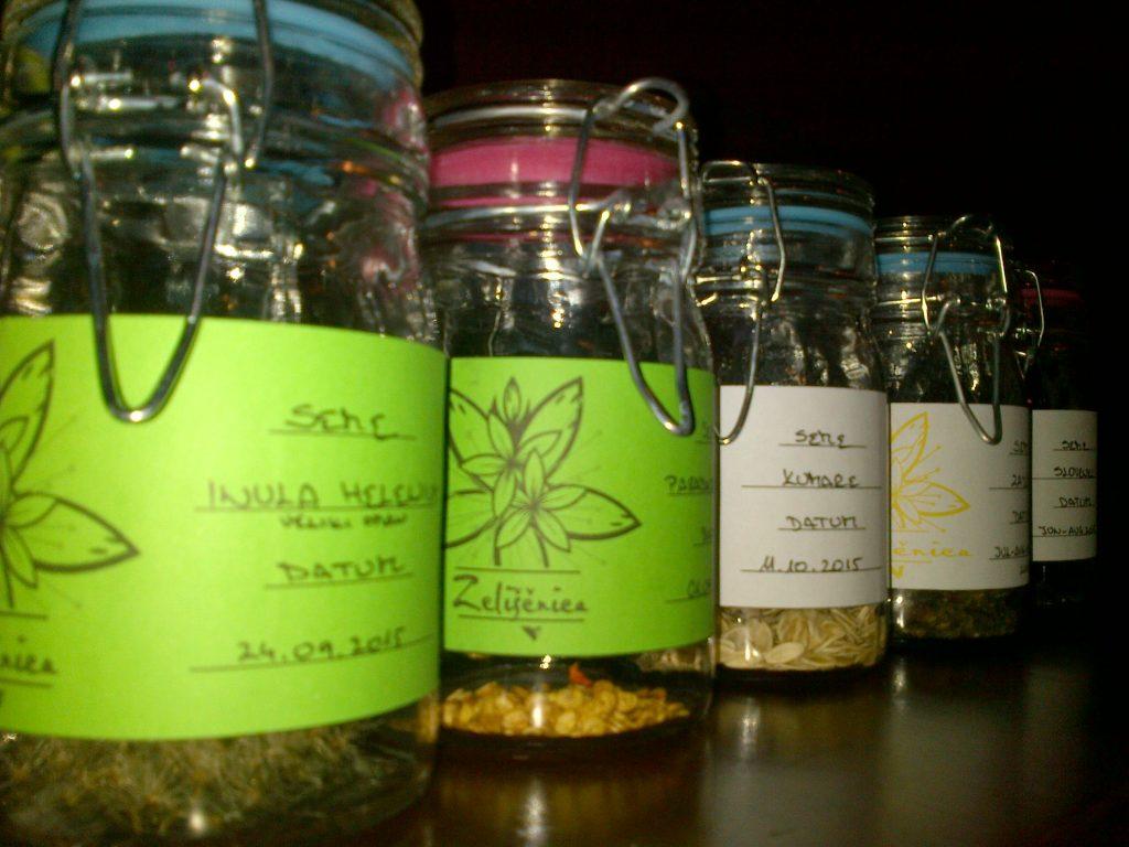 Jesensko delo z zelišči -spravilo semen