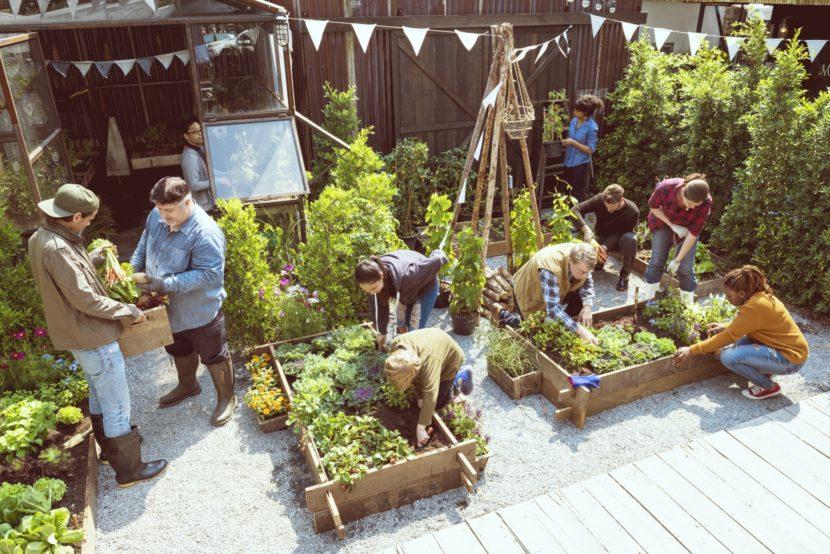 Izris samooskrbnega domačega zelenjavnega vrta, načrtovanje vrta, kako načrtujemo vrt, vrt brez prekopavanja, visoke grede