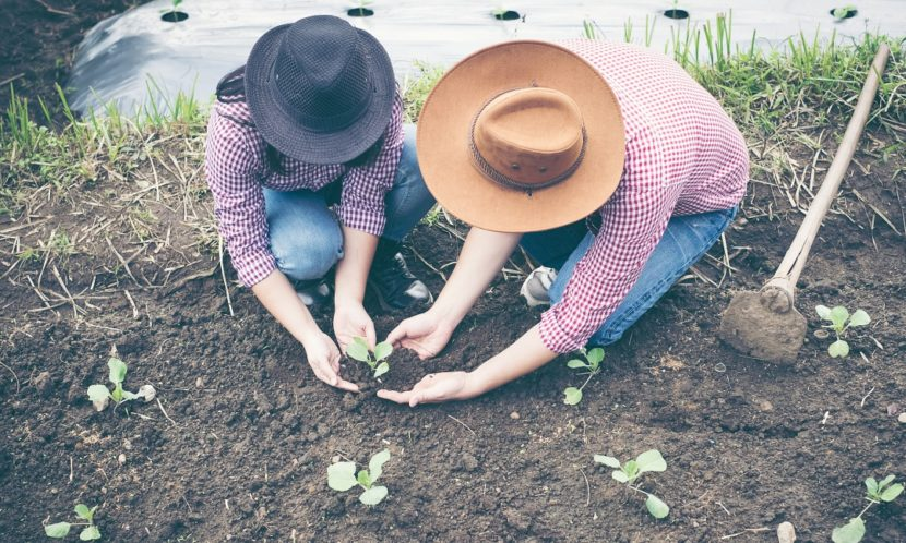 spomladanske vrtne grede, priprava načrtovanje vrta spomladi