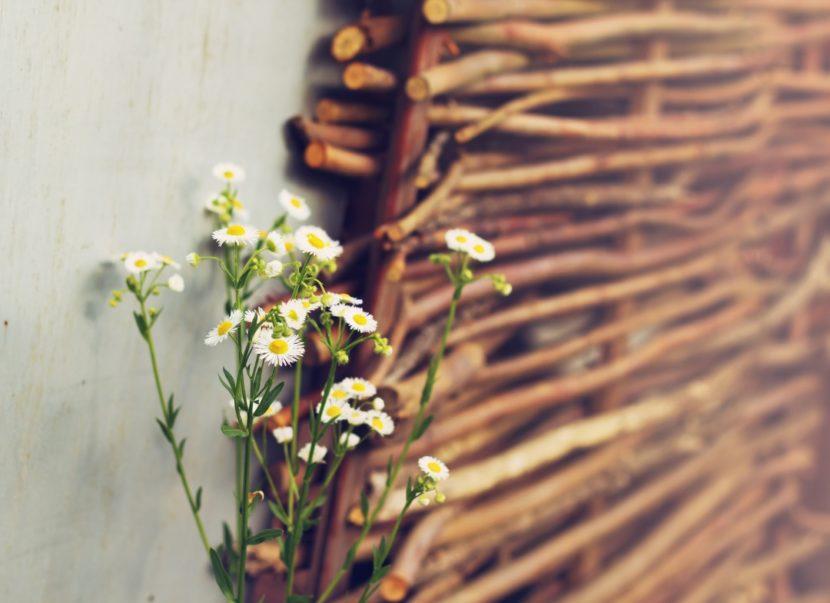pletena ograja iz vrbovih vej pletarstvo slovenske vrtne ograje plot