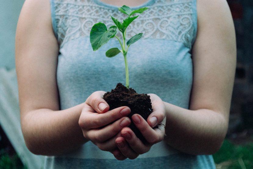 vrtna prst zemlja na vrtu gnojenje zastirka regeneracija zemlje