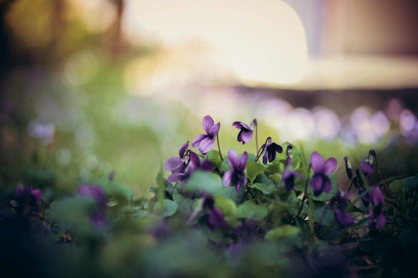 jesenska zasaditev na pokopališču, zasaditve pokopališče, idejne zasaditve za grob,nagrobne rože, trajnice za na grob, nagrobne zasaditve, nagrobne rastline 2019