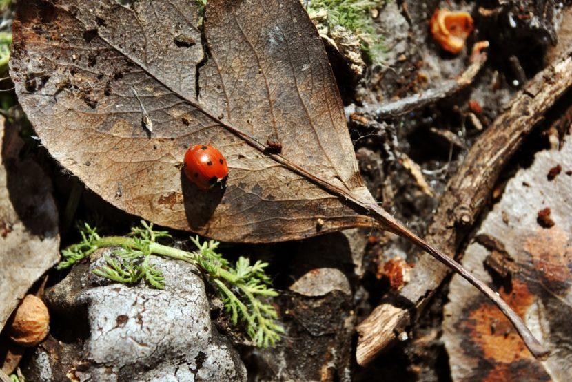 odpadlo listje na vrtu, pikapolonica, življenje v prsti