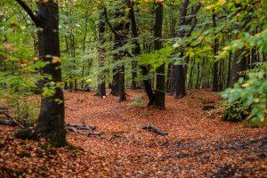 gozdna tla rodovitnost