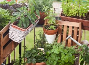 vrt na balkonu zelisca
